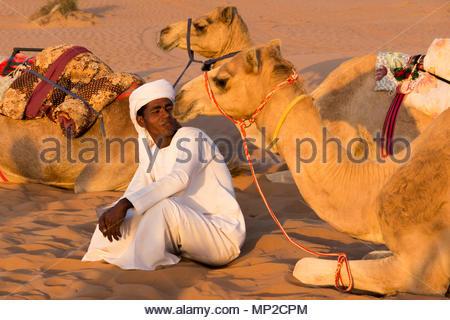 Camel driver con i suoi cammelli nel deserto Oman Foto Stock