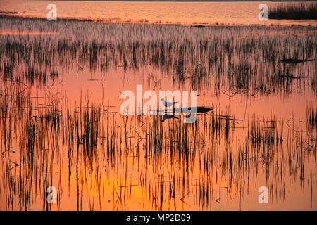 Un gabbiano solitario in attesa di amore su una piccola isola mentre il sole tramonta e i colori riflessi sull'acqua. Non mollare mai. Foto Stock