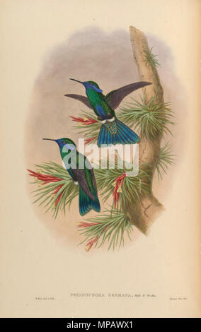 . Germana Petasophora = Colibri coruscans germano [1] . 1880. John Gould (1804-1881) nomi alternativi Gould Descrizione British zoologo Data di nascita e morte 14 Settembre 1804 2 marzo 1881 Luogo di nascita e morte Lyme Regis London Authority control : Q313787 VIAF: 29597222 ISNI: 0000 0001 2125 9888 ULAN: 500006638 LCCN: N79100355 NLA: 35137514 WorldCat & William Matthew Hart (1830-1908) nomi alternativi William Hart Descrizione British pittore animale Data di nascita e morte 1830 1908 Luogo di nascita e morte Limerick Greater London Authority control : Q8015234 VIAF: 91 Foto Stock
