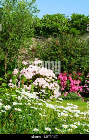 Giardini del Regno Unito. Una bella estate giardino murato aiuola di confine display compresa Marguerite margherite e ortensie Foto Stock