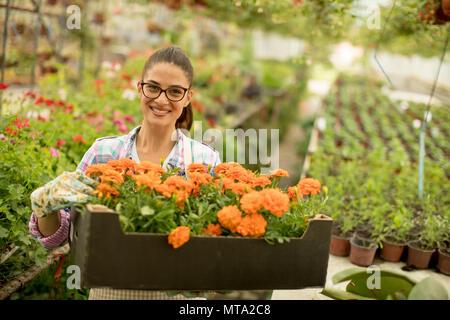 Piuttosto giovane donna in possesso di una scatola piena di fiori di primavera in serra Foto Stock