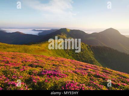 Flowes in montagna durante il sunrise. Bellissimo paesaggio naturale nel periodo estivo Foto Stock