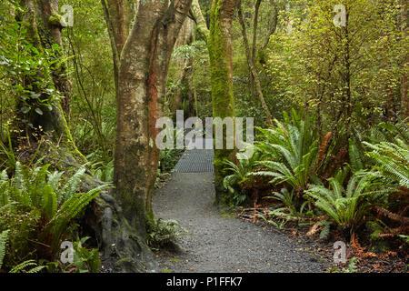 Via a piedi attraverso Seaward Riserva di Bush, Invercargill, Southland, Isola del Sud, Nuova Zelanda Foto Stock