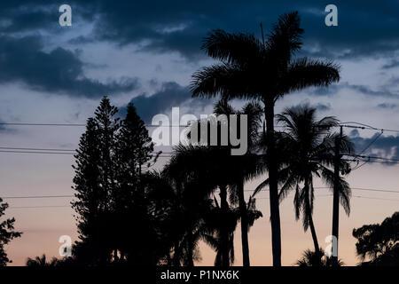 Silhouette di palme lascia isolato guardando in alto contro il cielo in Siesta Key, Sarasota, Florida con rosa arancione cielo blu, linee di alimentazione Foto Stock
