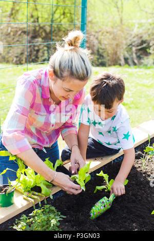 Bella madre e suo figlio biondo piantare insalata del letto sollevata nel suo giardino Foto Stock