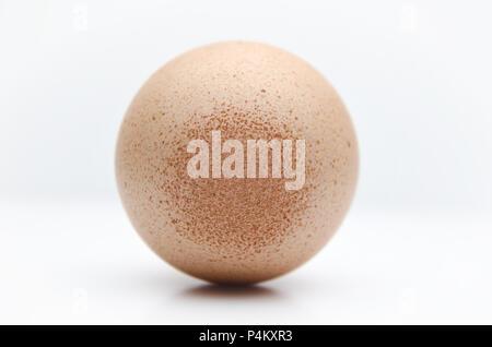 Avvistato uovo fresco di un pollo su un tasto alto sfondo bianco Foto Stock