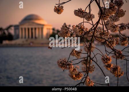 Il Jefferson Memorial incorniciato da dei ciliegi in fiore durante il Cherry Blossom Festival in Washington, DC Foto Stock