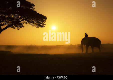 Ora d'oro del mahout e silhouette di elefante in campo mattina tempo questa la vita dei popoli nel villaggio di Chang della provincia di Surin, Thailandia. La tradizione li Foto Stock
