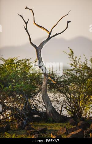 La mattina presto alla riva del lago di Cienaga de las Macanas wetland, Herrera provincia, Repubblica di Panama. Foto Stock