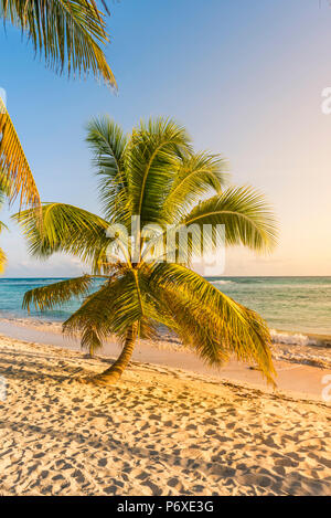Mano Juan, Saona Island, Parco Nazionale Orientale (Parque Nacional del Este), Repubblica Dominicana, Mar dei Caraibi.