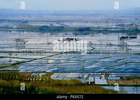 L'Italia, campi di riso in provincia di Vercelli visto dalla prima delle colline del Monferrato Foto Stock
