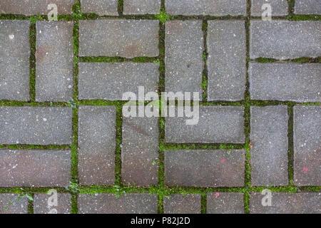 Un percorso di piastrelle di calcestruzzo con erba modello sfondo