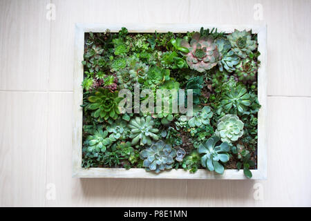 Verticale parete succulenti piantatrice in beige telaio in legno Foto Stock