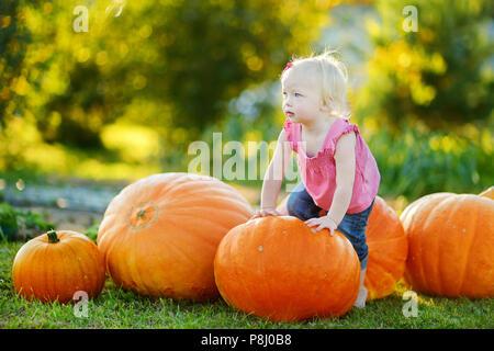 Carino bambina e un enorme varietà di zucche in un orto di zucche Foto Stock