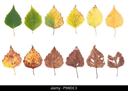 Concetto di autunno, età cambiamenti di foglie, stadi di invecchiamento, dalla nascita alla morte, essiccazione, il tempo vola Foto Stock
