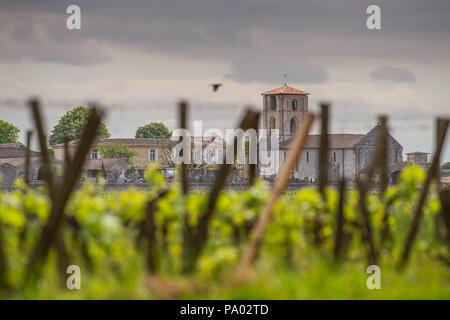 I vigneti di Saint Emilion, vigneti di Bordeaux, Francia Foto Stock