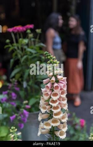 Foxgloves comune o Digitalis purpurea su un fioristi stallo a Borough Market di Londra. Foto Stock