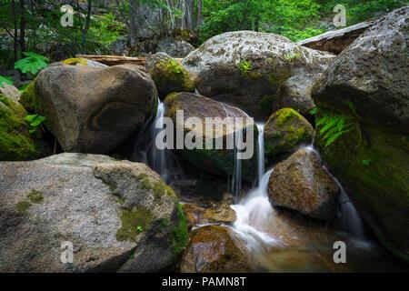 Rocce di grandi dimensioni, felci e muschi decorare idilliaco Tamarack Creek Falls, in una foresta canyon lungo l'Autostrada 120 nel Parco Nazionale di Yosemite Foto Stock