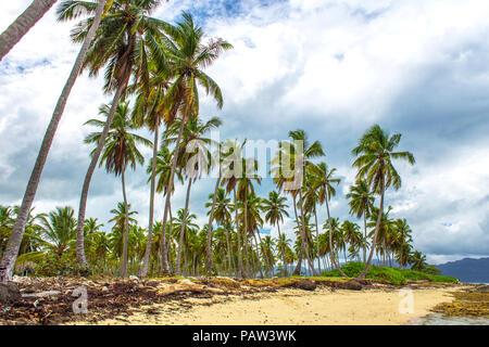 Spiaggia tropicale con alte palme, sabbia e alghe sullo sfondo del cielo grigio con le nuvole. Tempesta dei Caraibi Foto Stock