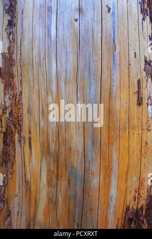 Close-up di un tronco di albero dove la corteccia è stata rimossa, ideale per uso come sfondo - Giovanni Gollop Foto Stock