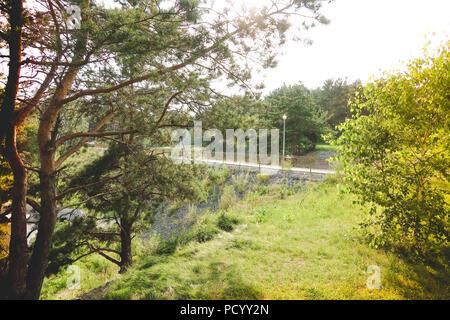 Il percorso di legno che conduce attraverso un bosco verde. Vista turistico sul percorso di legno tra alberi ed erba. Natura russa. Foto Stock