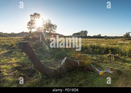 L'impostazione del caldo sole splende è ultima luce del giorno sul nuovo bellissimo Parco Nazionale Foreste vicino a Brockenhurst, Hampshire, Regno Unito