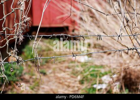 Vista ravvicinata di rotture di filo spinato recinto visto in corrispondenza della zona di confine Foto Stock