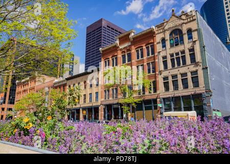Denver, 3 maggio: Bellissimo edificio e fiore viola blossom nel centro cittadino di maggio su 3, 2017 a Denver, in Colorado Foto Stock