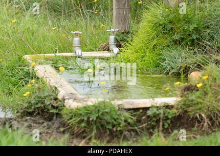 Bagno esterno utilizzato come bestiame trogolo di acqua - Scozia, Regno Unito Foto Stock