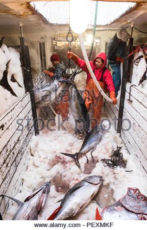 Deckhands pesce che si muove attorno ad un congelatore in barca da pesca a San Diego, California, Stati Uniti d'America Foto Stock