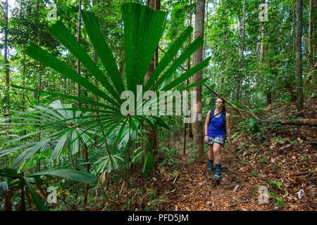 Una femmina turistiche a piedi attraverso la foresta pluviale tropicale guardando un gigante palm frond a Lambir Hills National Park, Sarawak, Malaysian Borneo Foto Stock