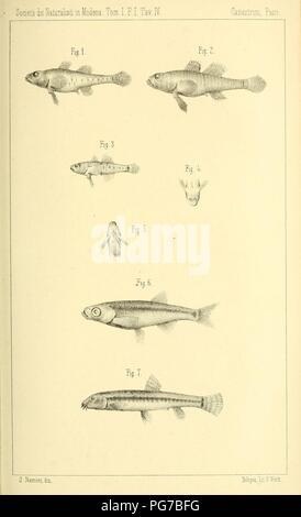Atti della Società dei naturalisti e matematici di Modena