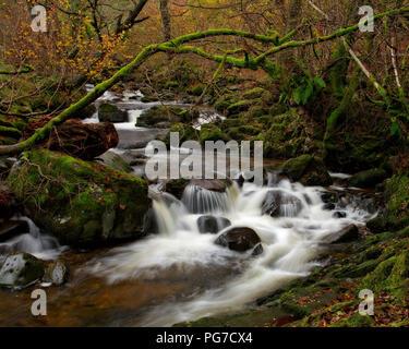 Fiume e gli alberi in autunno colori, Aira Force, Lake District, Inghilterra Foto Stock