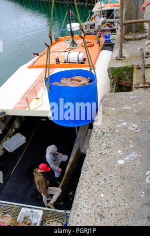 Granchio di mare catture vengono sbarcati al porto di Newlyn. Il 20 giugno 2018. Foto Stock