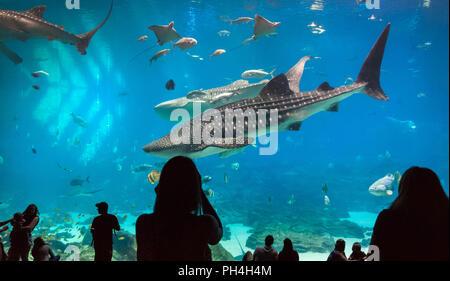 Atlanta Georgia Aquarium offre ai visitatori una splendida vista subacquea come enormi squali balena e una manta ray nuotare con due sommozzatori umani. Foto Stock