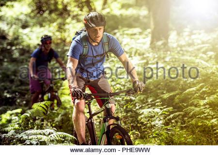 Matura in mountain bike nella Foresta Foto Stock