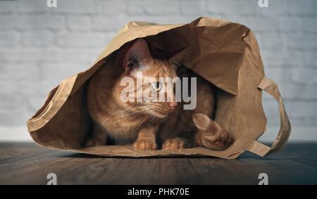 Lo zenzero Cute cat seduto in un sacchetto di carta e guardando curioso lateralmente. Foto Stock