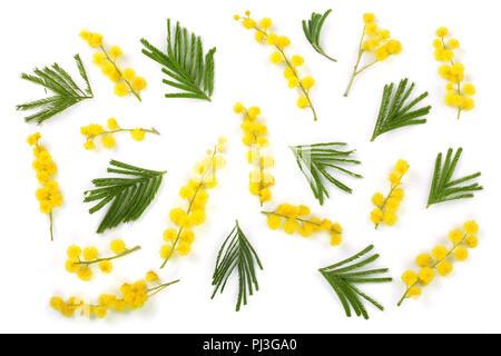 Biglietto di auguri con il cuore · La mimosa isolati su sfondo bianco.  Vista superiore Foto Stock d1888714fbf6