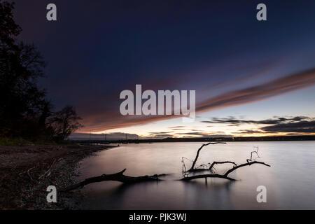 Atmosfera serale e driftwood sulla Ammersee Foto Stock