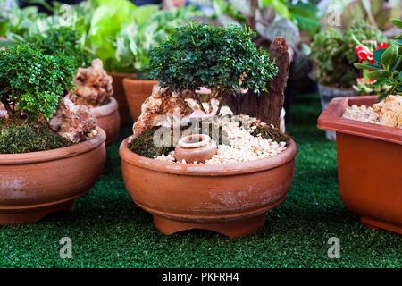 Decorazione Vasi Da Giardino : Decorativi piccoli buxus sempervirens bonsai vasi da fiori in