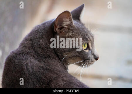 Awesome isolato simpatico gatto grigio ritratto su strada