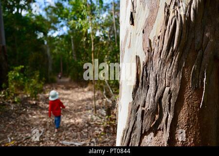 Un giovane bambino rosso da indossare a piedi attraverso una foresta, Dalrymple gap, QLD, Australia Foto Stock