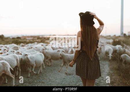 Vista posteriore della giovane donna a piedi nella parte anteriore del gregge di pecore Foto Stock