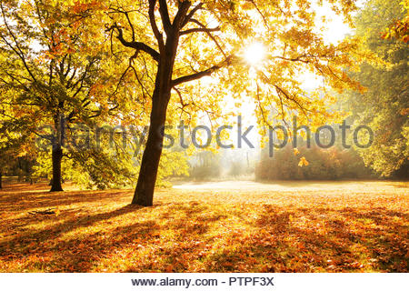 Il parco della città Berlino Germania autunno Berlin city Colore di autunno paesaggio colori autunnali nei boschi decidui alberi della foresta autunnale Foto Stock