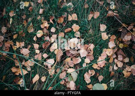 Foglie cadute, sfondo, vista dall'alto sull'erba verde Foto Stock