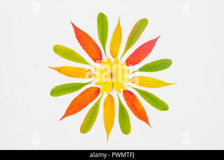 Composizione di autunno, pattern colorati di foglie di autunno e Gerusalemme giallo fiore di carciofo nel centro su uno sfondo bianco, vista dall'alto di laici piatta Foto Stock