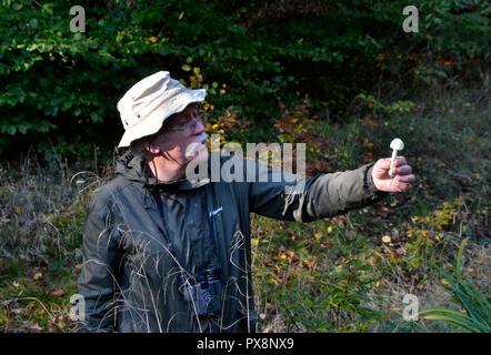 Funghi foraggio a piedi in Hampden bosco. Buckinghamshire Chilterns, England, Regno Unito Foto Stock