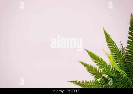 Foglie di felce su uno sfondo colorato, uno spazio vuoto per un testo, piatto laico, vista da sopra, stilizzata foto Foto Stock