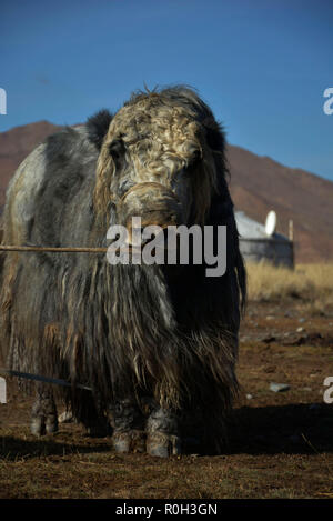 Mongolia occidentale Foto Stock
