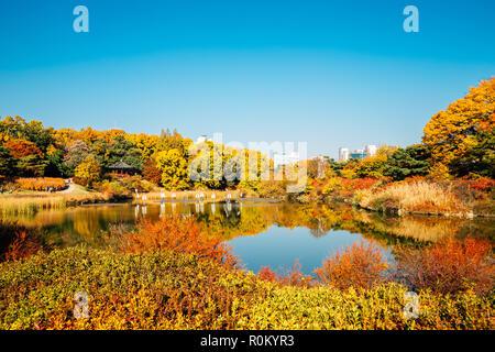Olympic Park, acero di autunno e il lago a Seoul, Corea del Sud